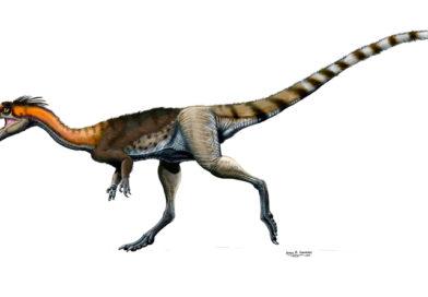 Lucianovenator bonoi, un dinosaurio de Caucete