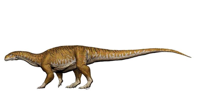 Un fósil que cambia la historia de los dinosaurios gigantes