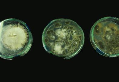 Control biológico para plagas de la vid