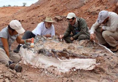 Un hallazgo prehistórico para la historia