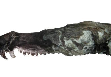 """Pseudotherium, """"madre"""" de los mamíferos"""